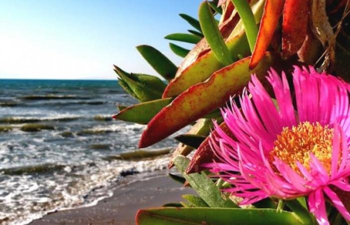 Golden beach8_595_450_95